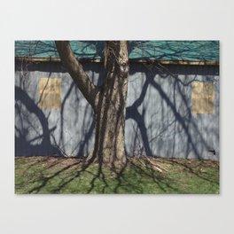 trunk shadow Canvas Print