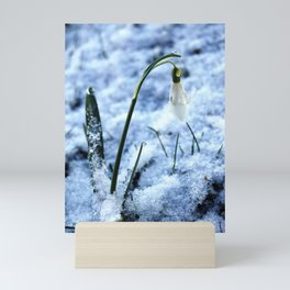 First sign of spring Mini Art Print