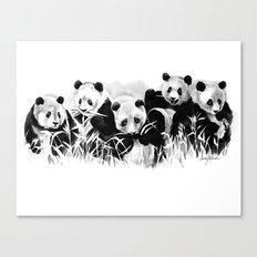 Panda Siblings Canvas Print