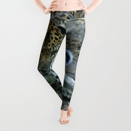 Amur Leopard Leggings