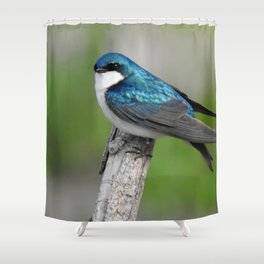 Male Tree Swallow II Shower Curtain