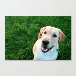 smiling yellow lab Canvas Print