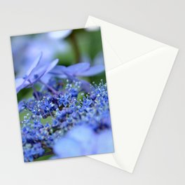 Taube Lace Cap Hydrangea Close Up Stationery Cards