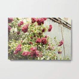 Vintage Rose I  | Pastel Color | Street Photography | Flower Photography | Fine Art Photo Print Metal Print
