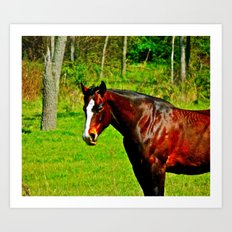 Equine Beauty Art Print