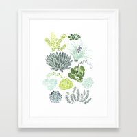 succulents Framed Art Prints featuring Succulents  by Rae Ritchie