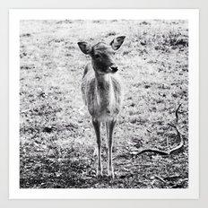 Young Deer Art Print