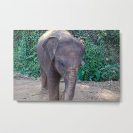 Baby Asian Elephant Metal Print