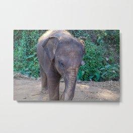 Baby Asian Elephant Metal Print
