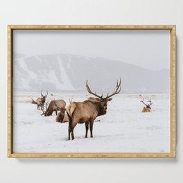 Elk Wintering in Jackson Hole Wyoming Serving Tray