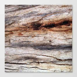 Shiver Me Timbers - 3 Canvas Print