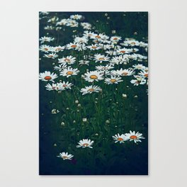 White Field Of Daisies Canvas Print