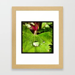 Greendrop Framed Art Print