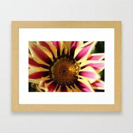 Flower, Hansville, WA Framed Art Print