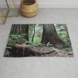 Coast Redwoods Rainforest 03 Rug