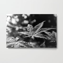 After the rain - black and white Metal Print