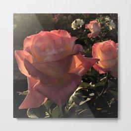 Sunset Roses Metal Print
