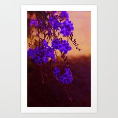 Chase away the blues Art Print