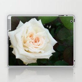White Rose With Natural Garden Background Laptop & iPad Skin