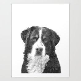 Black and White Bernese Mountain Dog Art Print
