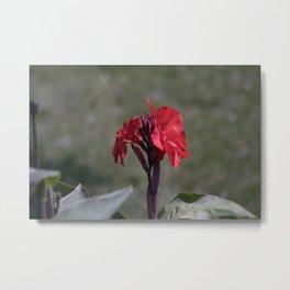 Longwood Gardens - Spring Series 187 Metal Print