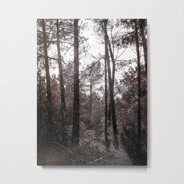 Bosc Metal Print