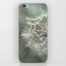 Tragopogon -Meadow Salsify 43 iPhone & iPod Skin
