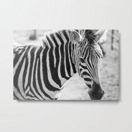 Wild Striped Horses !! Metal Print