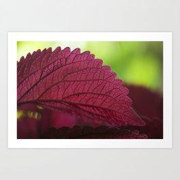 Coleus Pink III Art Print