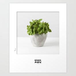 Mint herb planter poster for the kitchen with hebrew name Art Print
