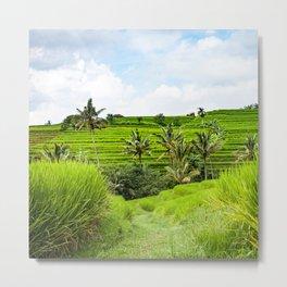 Bali rice terraces landscape rice Metal Print