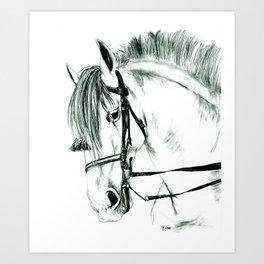 Agente VII | Andalusian Stallion Art Print