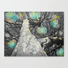 Still looking for the sun Canvas Print
