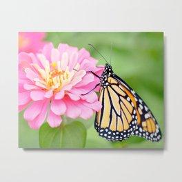 Zinnia & Butterfly Metal Print