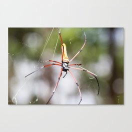 Golden silk orb weaver Canvas Print