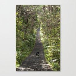 Border Collie on a Walk Canvas Print