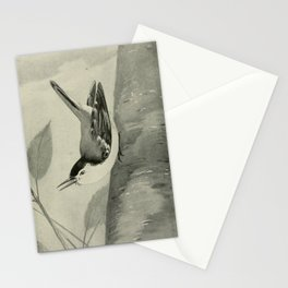 Vintage Print - White-breasted Nuthatch Stationery Cards