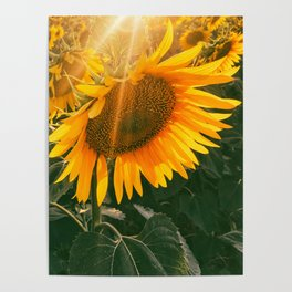 summer in the fields Poster