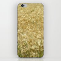 catcher in the rye iPhone & iPod Skins featuring soft rye field II by blackpool