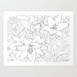 Asiatic Lillies I line art Art Print