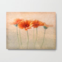 Orange Gerberas Metal Print