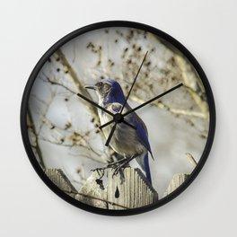 Blue Jay Nature Photography Wall Clock