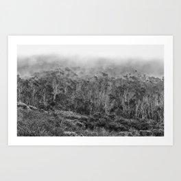 California Coastal Fog Art Print