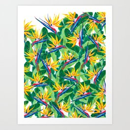 Summer Strelitzia Art Print