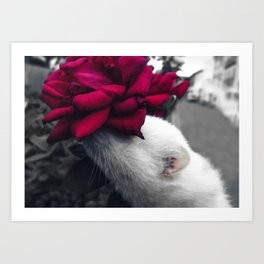Rosy Ferret Art Print