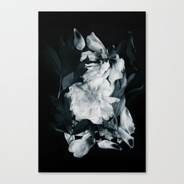 White peonies on black Canvas Print