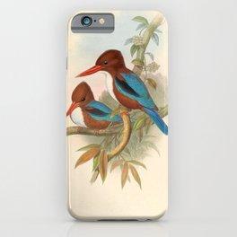 Halcyon Fusca Kingfisher Asian Birds iPhone Case