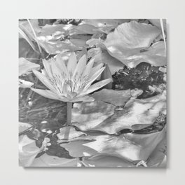 Waterlily in a pond Metal Print