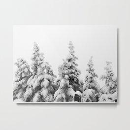 Snow Covered Pines Metal Print