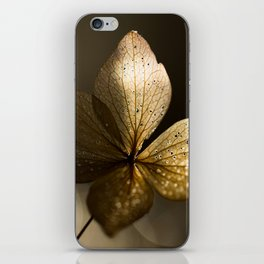Autumn Scene - Dry Petals with Golden Sunset Light #decor #society6 #buyart iPhone Skin